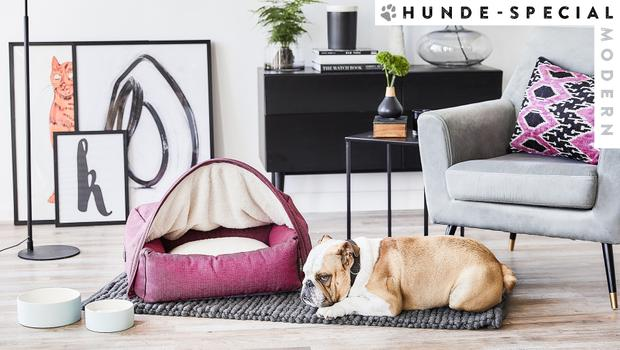 Modern Dog Hauptmaske
