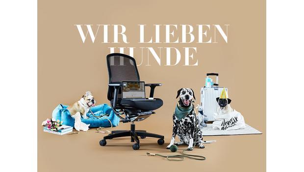 Das Westwing-Hunde-Paradies