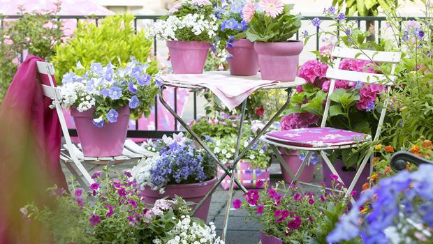Blühende Balkonoase