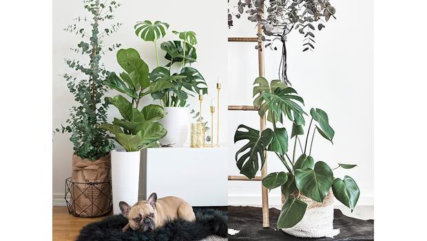 Trend: rostliny