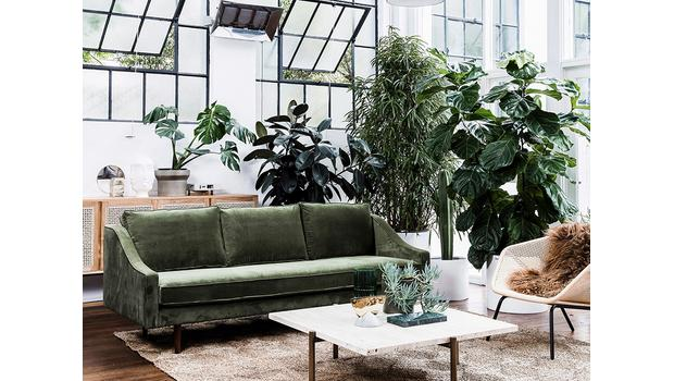 Trend: XXL indoor garden