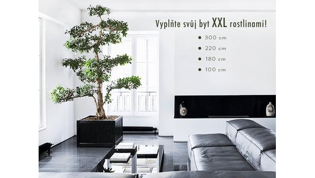 Trend: Indoor Tree