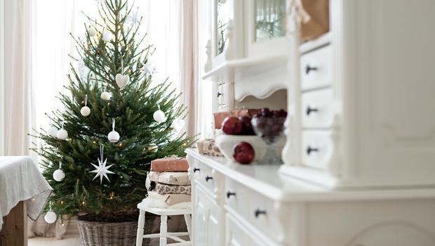 Unvergängliche Weihnachtsbäume