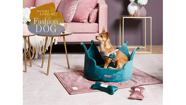 Must-haves für Fashion-Hunde