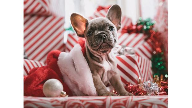 Unsere Hunde-Geschenkideen