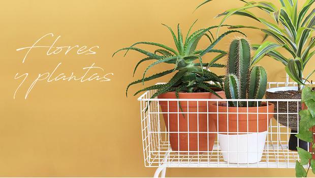 Buena planta