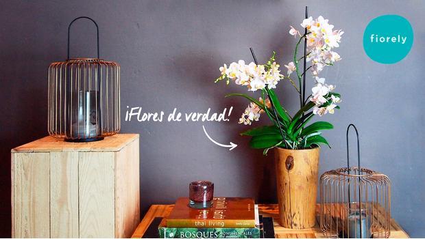 Fiorely