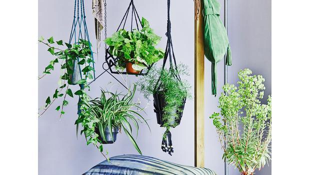 Decorar con plantas y flores