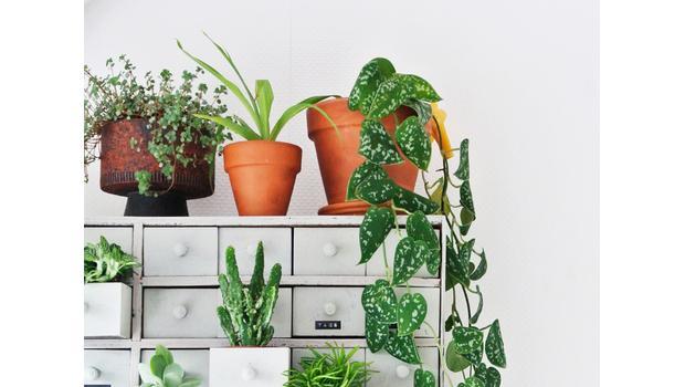 Añade plantas artificiales