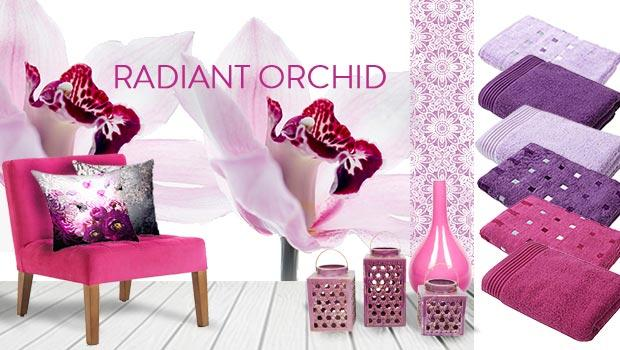Radiant Orchid & Friends
