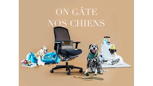 We love dogs: Hunde-Kampagne