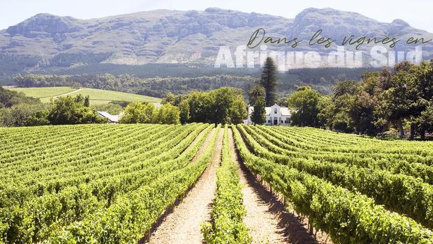 Inspiration : Stellenbosch