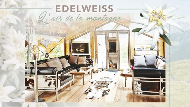 Délicate edelweiss