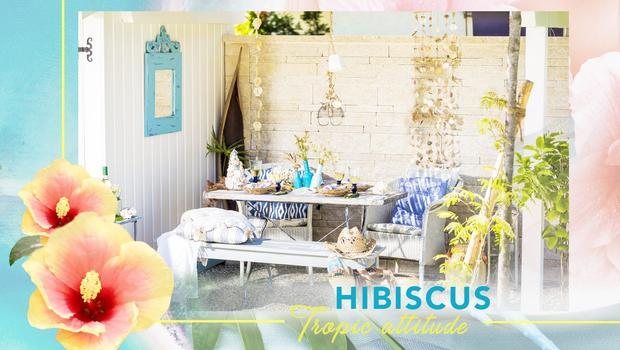 Hibiscus des îles