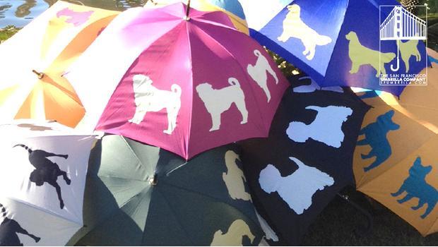 The San Fransisco Umbrella