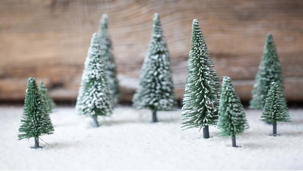 Alberi di Natale: la guida!