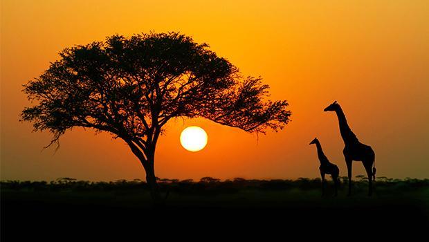 Afrique c'est chic