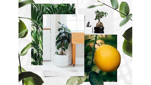 BO House Rules Botanisch