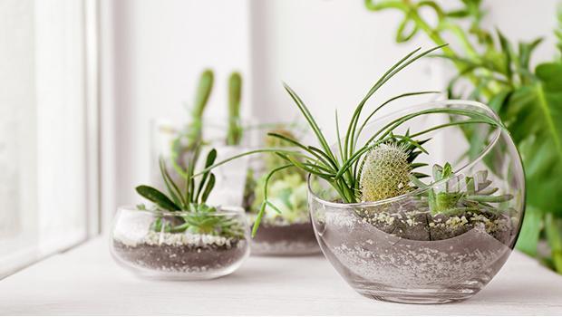 Trend alert: Micro gardening