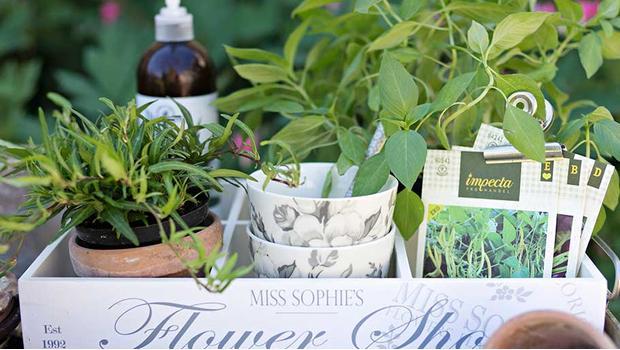 W ziołowym ogrodzie