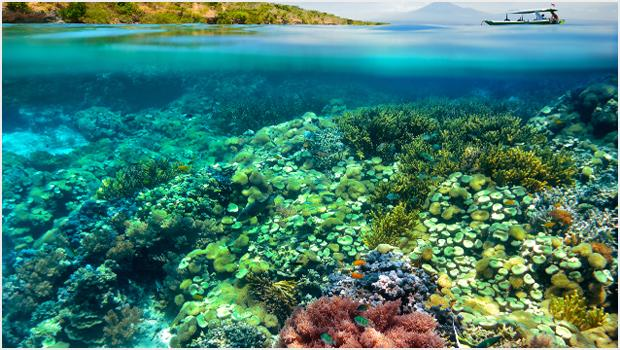 Koralowe fantazje