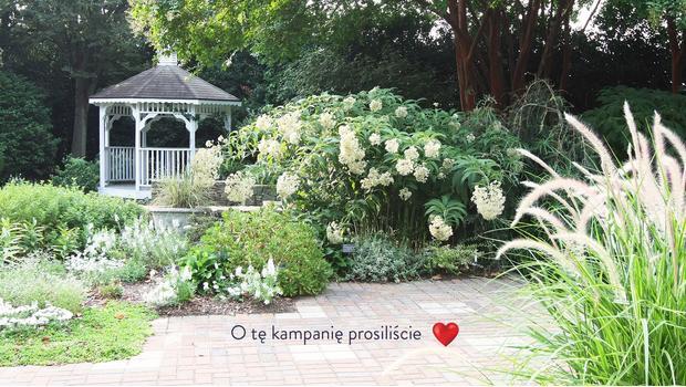 Stylowy ogród od A do Z