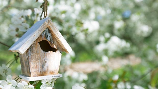 Drzew szum, ptaków śpiew…