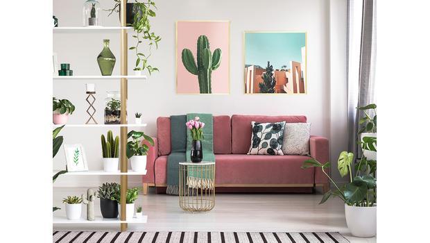 Stylish motive: cacti