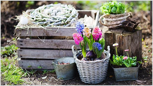 Ogród Jane Austen