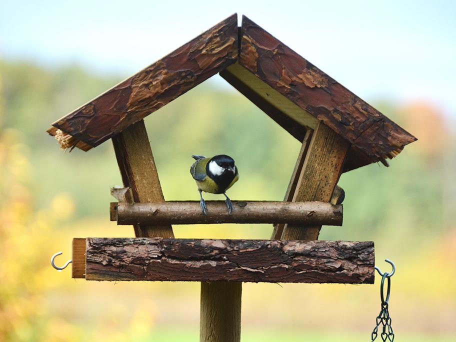 Casetas para pájaros