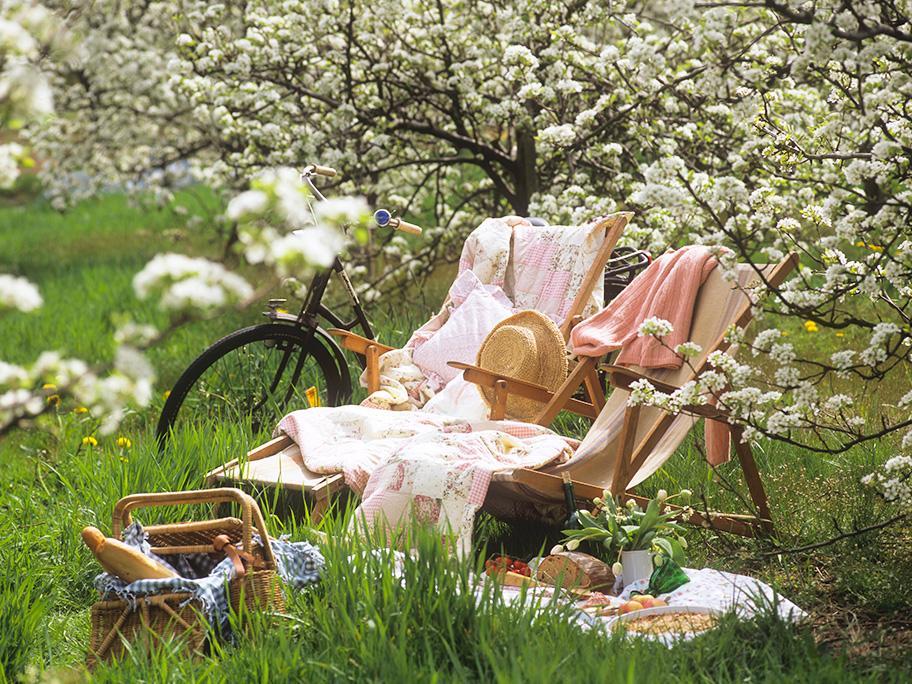 Un amor de picnic
