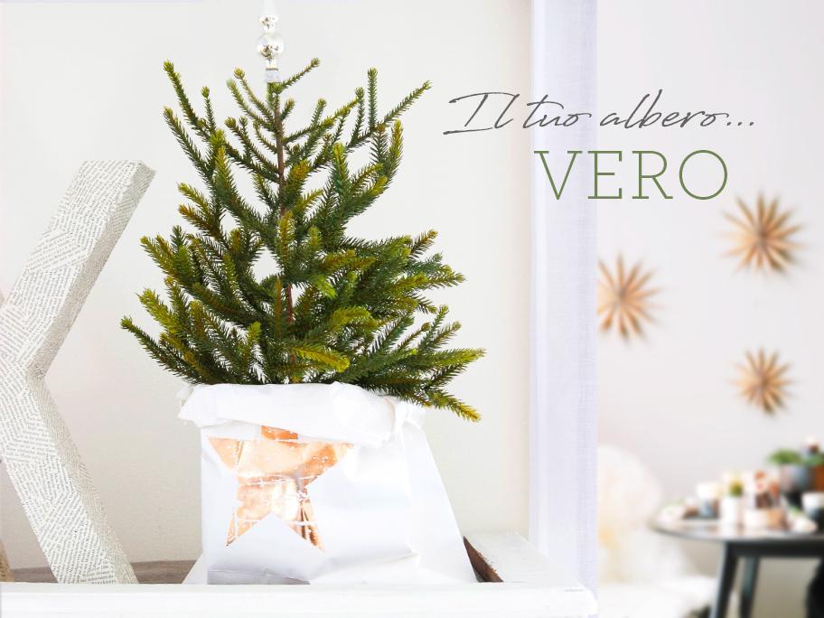 Alberi e Stelle di Natale
