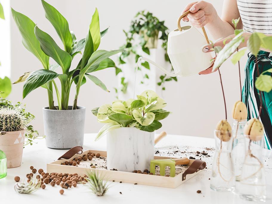 Spersonalizuj dom roślinami!