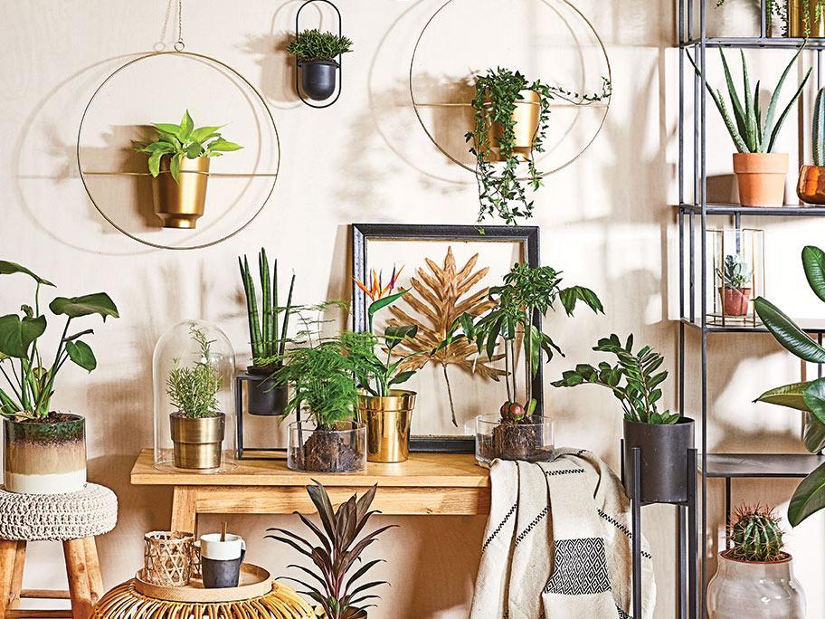 Wyeksponuj swoje rośliny!