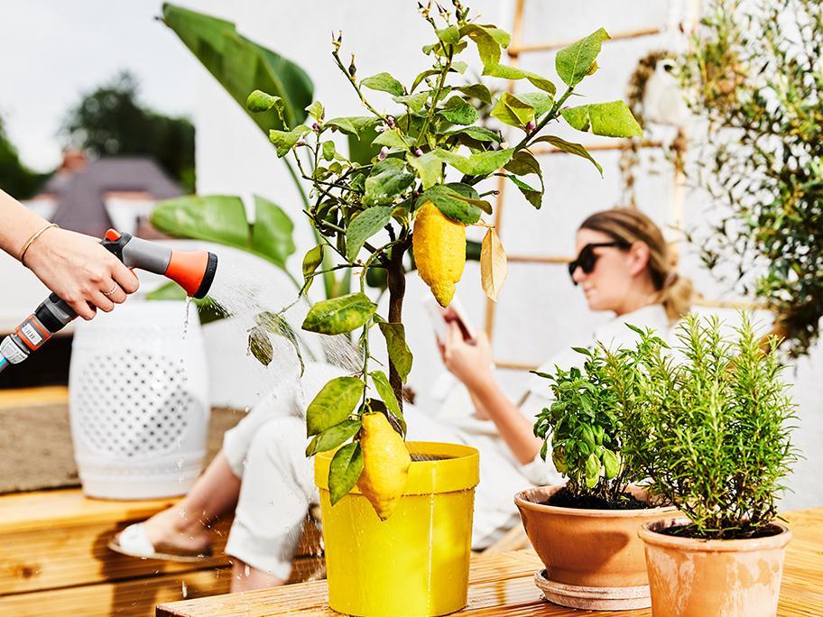 Ako sa starať o rastliny